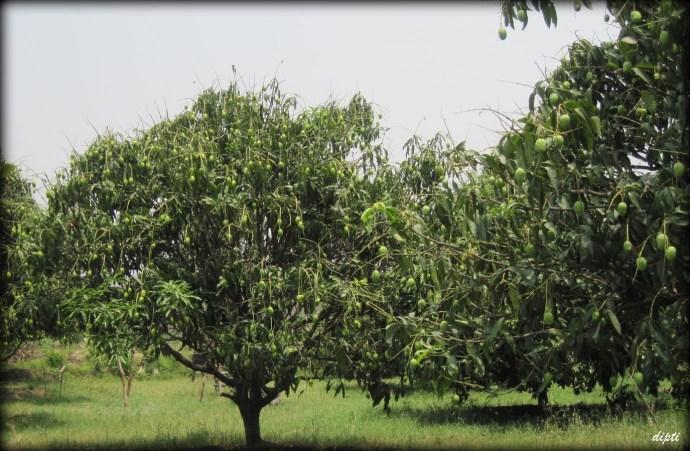 uttarakhand corbett mangrove