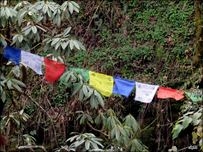 Buddhist flags nepal